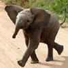 smileys 24705-elephant6.jpg
