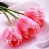 smileys 24719-roses.jpg