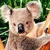 smileys 24777-koala4.jpg