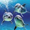 smileys 25404-dolphins.jpg