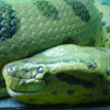 smileys 25512-snake3.jpg