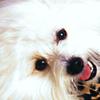 smileys 25773-1155161480_103.jpg