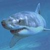 smileys 26648-1155161480_061.jpg