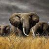 smileys 27546-elephant7.jpg