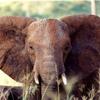 smileys 28004-elephant.jpg