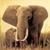 smileys 28698-elephant1.jpg