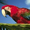 smileys 29108-parrot.jpg