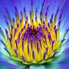 smileys 29541-flower2.jpg