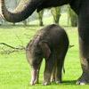 smileys 29870-little_elephant.jpg
